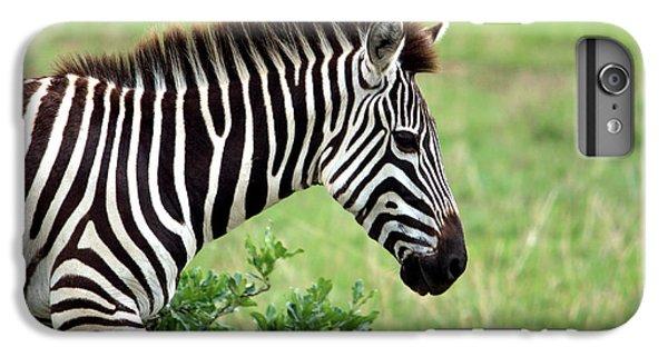 Zebra IPhone 6 Plus Case by Aidan Moran
