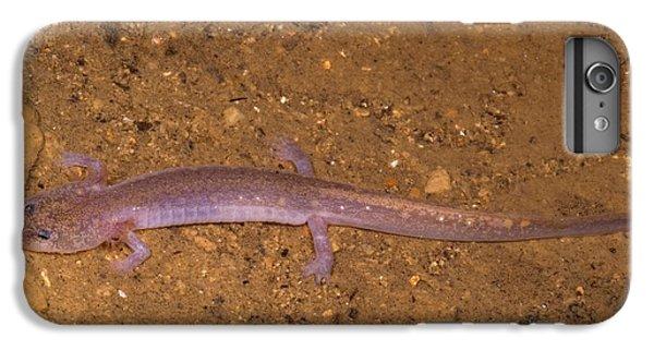 Ozark Blind Cave Salamander IPhone 6 Plus Case