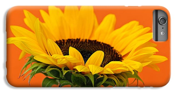 Sunflower iPhone 6 Plus Case - Sunflower Closeup by Elena Elisseeva
