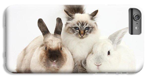 Birman iPhone 6 Plus Case - Tabby-point Birman Cat And Rabbits by Mark Taylor