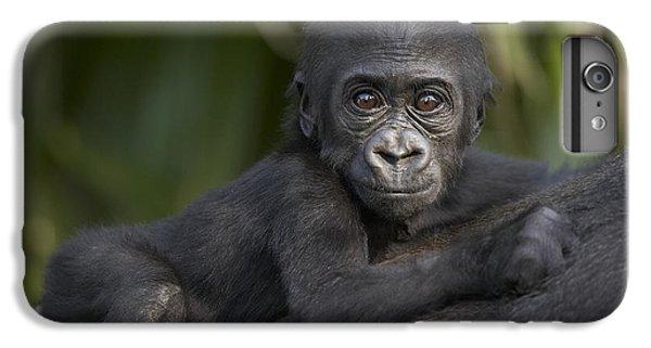 Western Lowland Gorilla Gorilla Gorilla IPhone 6 Plus Case by San Diego Zoo
