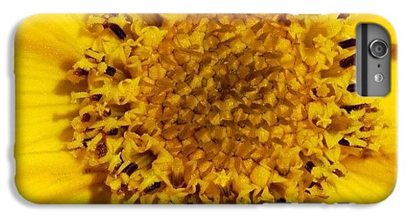 Bright iPhone 6 Plus Case - Yellow Flower Detail by Matthias Hauser