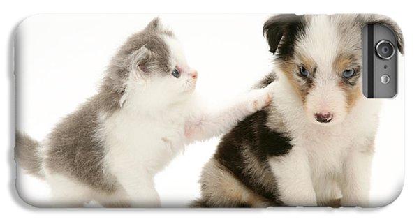 Birman iPhone 6 Plus Case - Kitten And Pup by Jane Burton