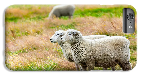 Sheep iPhone 6 Plus Case - Sheeps by MotHaiBaPhoto Prints