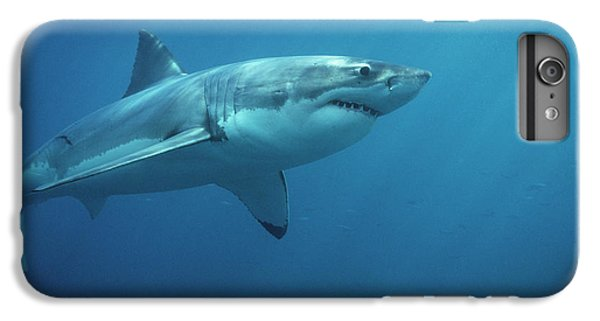 Sharks iPhone 6 Plus Case - Great White Shark Carcharodon by Mike Parry