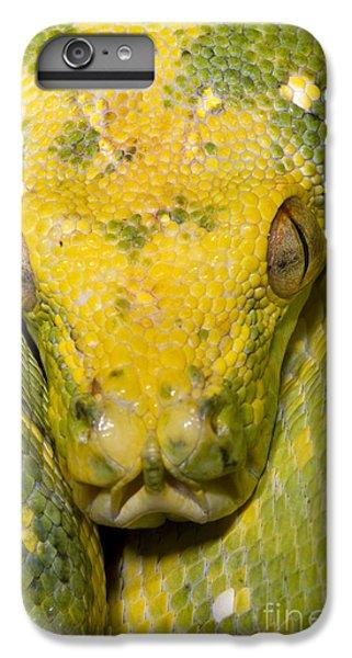 Green Tree Python IPhone 6 Plus Case