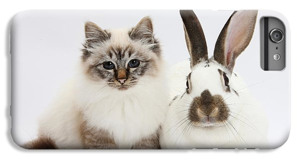 Birman iPhone 6 Plus Case - Tabby-point Birman Cat And Rabbit by Mark Taylor