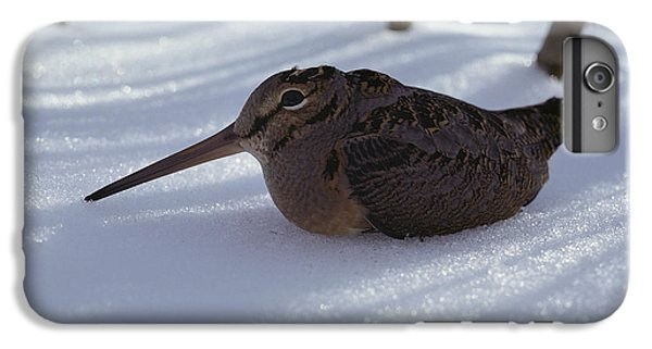A Woodcock Sits In The Snow IPhone 6 Plus Case