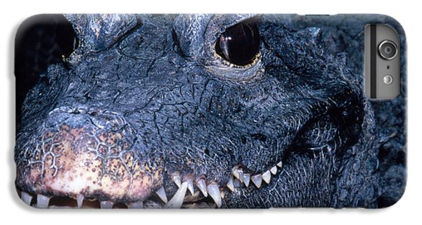 African Dwarf Crocodile IPhone 6 Plus Case by Dante Fenolio