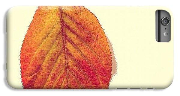 Orange iPhone 6 Plus Case - Autumn by Nic Squirrell