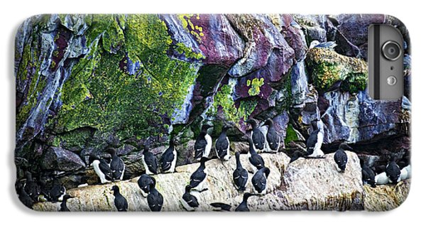 Razorbill iPhone 6 Plus Case - Birds At Cape St. Mary's Bird Sanctuary In Newfoundland by Elena Elisseeva