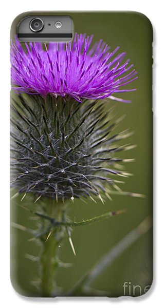 Blooming Thistle IPhone 6 Plus Case
