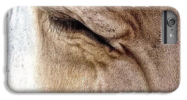 Ohio iPhone 6 Plus Case - Brown Swiss Cow by Natasha Marco