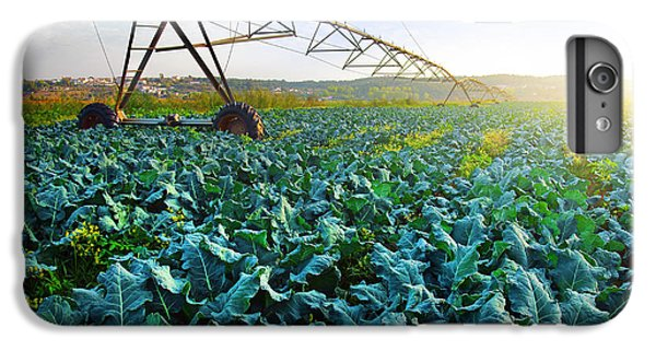 Cabbage Growth IPhone 6 Plus Case by Carlos Caetano