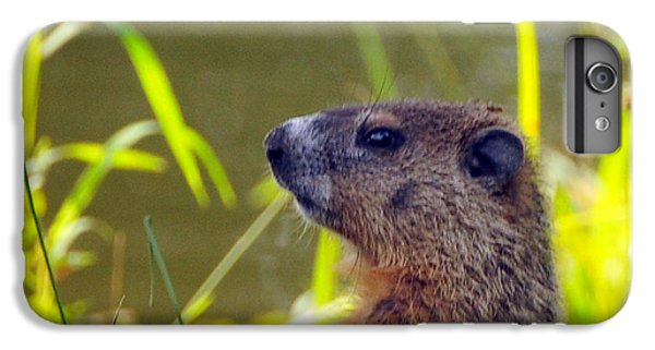 Chucky Woodchuck IPhone 6 Plus Case by Paul Ward