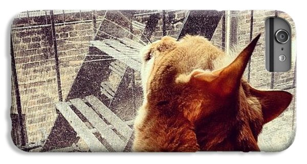Orange iPhone 6 Plus Case - City Cat And Fire Escapes by Vivienne Gucwa