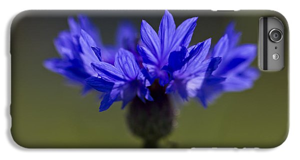 Cornflower Blue IPhone 6 Plus Case