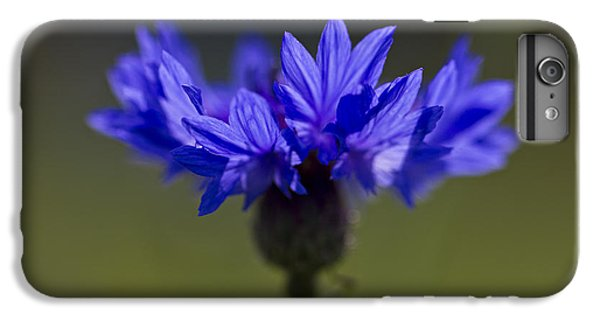 IPhone 6 Plus Case featuring the photograph Cornflower Blue by Clare Bambers