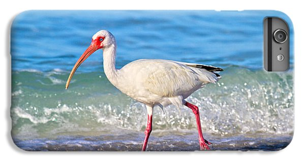 Ibis iPhone 6 Plus Case - For The Birds by Betsy Knapp