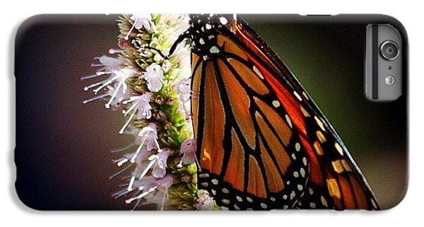 Bestoftheday iPhone 6 Plus Case - Further To Fly by Matthew Blum