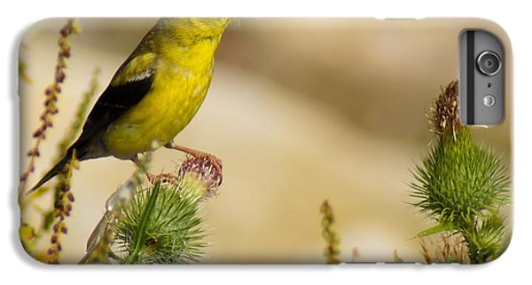 Goldfinch On Lookout IPhone 6 Plus Case by Bill Pevlor