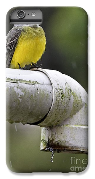 Grey-capped Flycatcher IPhone 6 Plus Case
