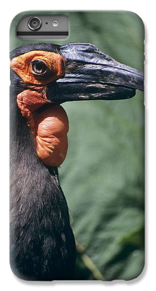 Ground Hornbill Head IPhone 6 Plus Case by David Aubrey