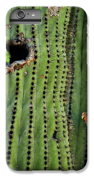 Lovebirds And The Saguaro  IPhone 6 Plus Case