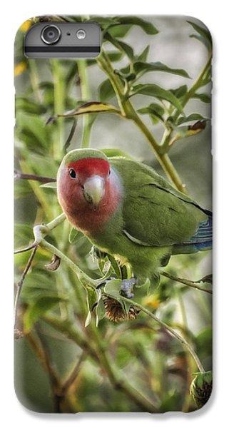 Lovely Little Lovebird IPhone 6 Plus Case