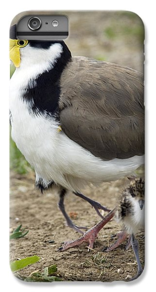 Lapwing iPhone 6 Plus Case - Masked Lapwing And Chick by Tony Camacho