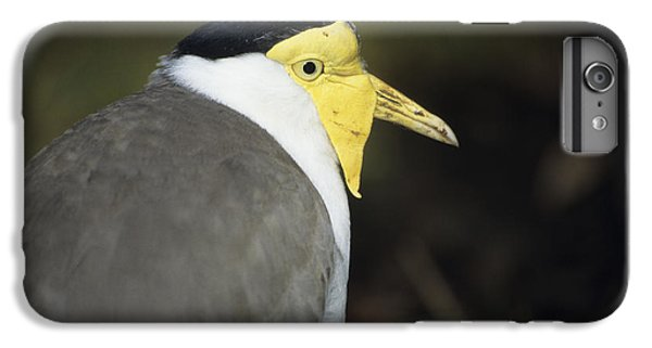 Lapwing iPhone 6 Plus Case - Masked Plover by David Aubrey