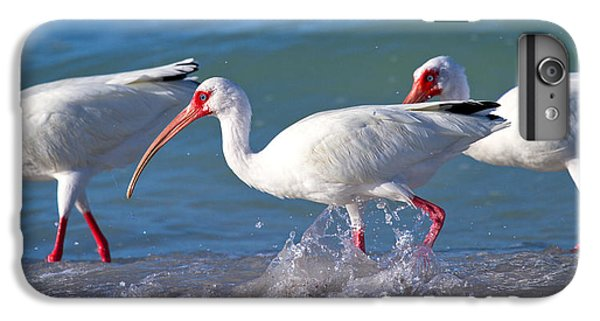 Ibis iPhone 6 Plus Case - Morning Stroll by Betsy Knapp