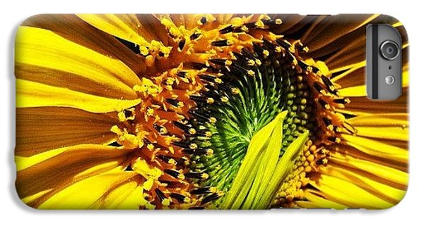 Bright iPhone 6 Plus Case - Morning Sun by Gwyn Newcombe