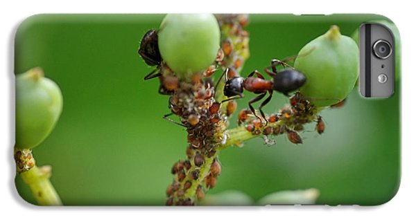 Ant iPhone 6 Plus Case - Mutualistic by Susan Capuano