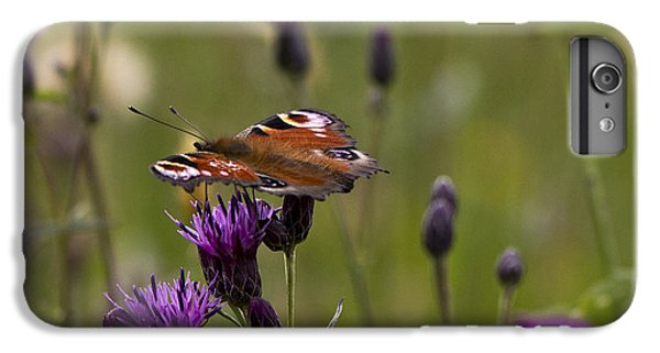 Peacock Butterfly On Knapweed IPhone 6 Plus Case