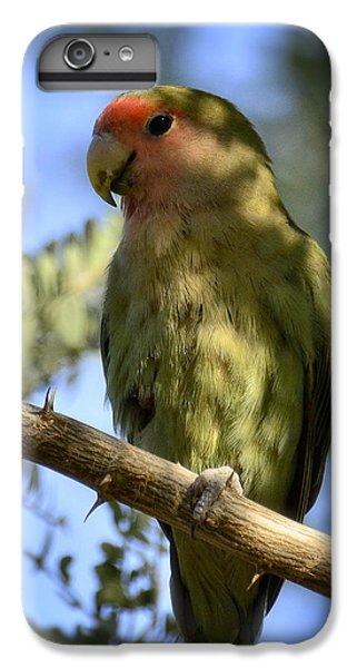 Pretty Bird IPhone 6 Plus Case by Saija  Lehtonen