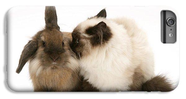 Birman iPhone 6 Plus Case - Rabbit And Cat by Jane Burton