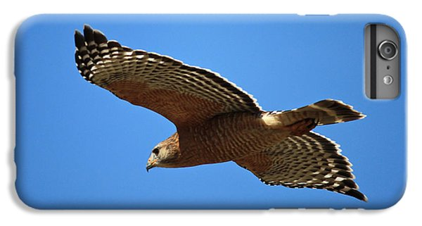 Red Shouldered Hawk In Flight IPhone 6 Plus Case