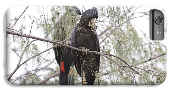 Red Tailed Black Cockatoos IPhone 6 Plus Case by Douglas Barnard