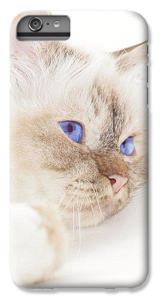 Birman iPhone 6 Plus Case - Sacred Cat Of Burma by Melanie Viola