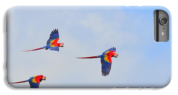 Scarlet Macaws IPhone 6 Plus Case by Tony Beck
