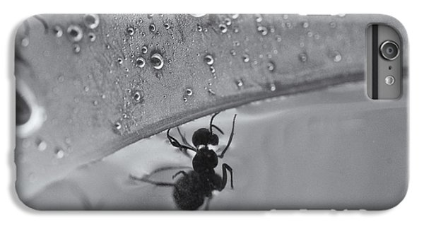 Ant iPhone 6 Plus Case - Search And Rescue by Susan Capuano