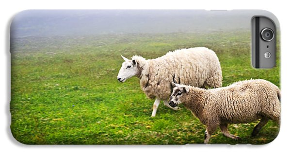 Sheep In Misty Meadow IPhone 6 Plus Case by Elena Elisseeva