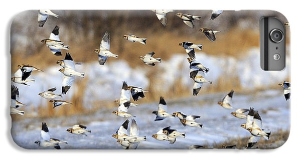 Snow Buntings IPhone 6 Plus Case by Tony Beck