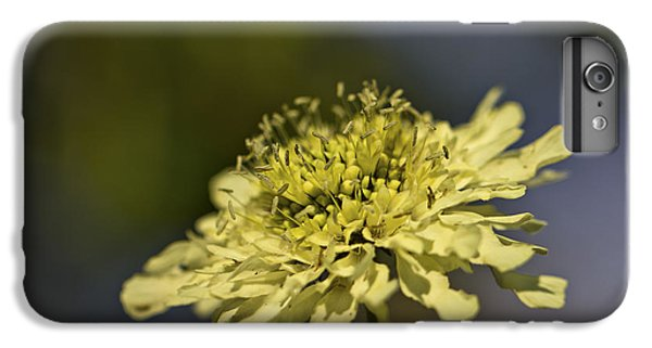 IPhone 6 Plus Case featuring the photograph Soft Yellow. by Clare Bambers