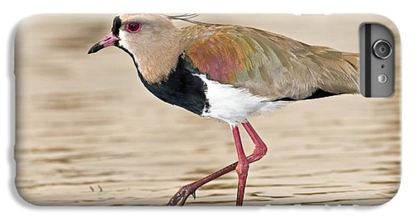 Lapwing iPhone 6 Plus Case - Southern Lapwing by Tony Camacho