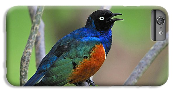 Superb Starling IPhone 6 Plus Case by Tony Beck