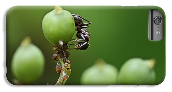 Ant iPhone 6 Plus Case - Tending The Herd by Susan Capuano
