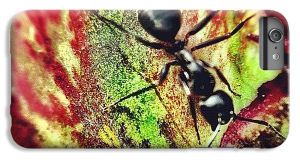 The Ants Have Arrived IPhone 6 Plus Case
