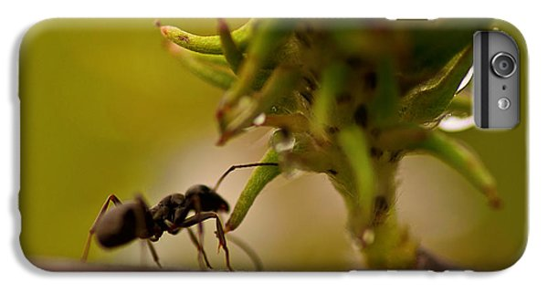 Ant iPhone 6 Plus Case - The Harvester by Susan Capuano